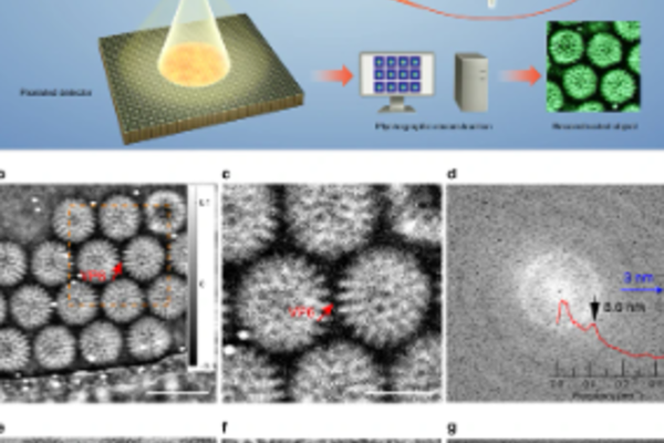 cryo pytchographic configuration and reconstruction of rotavirus dlps