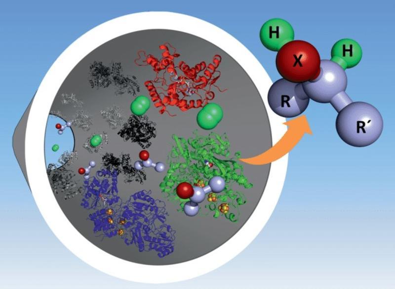 Carbon nanotube-coated tube for flow catalysis