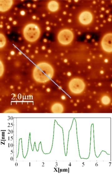PS/PMMA phase-separated thin film imaged with AFM